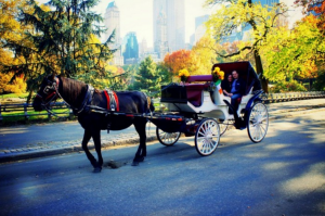 My photos of the (very beautiful) Central Park in Autumn